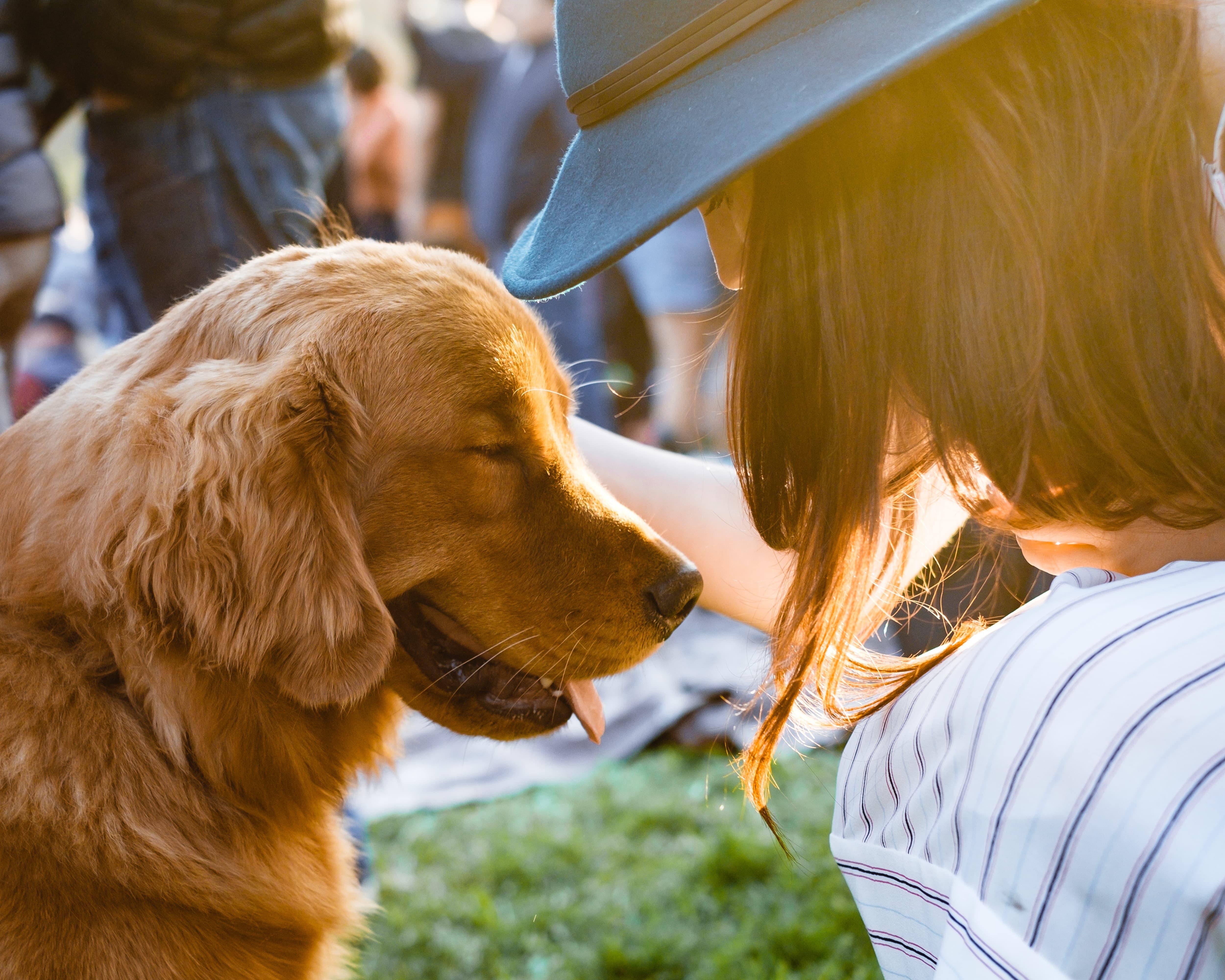 job étudiant comme pet-sitter