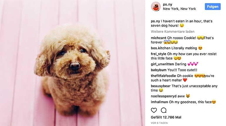 hund auf instagram