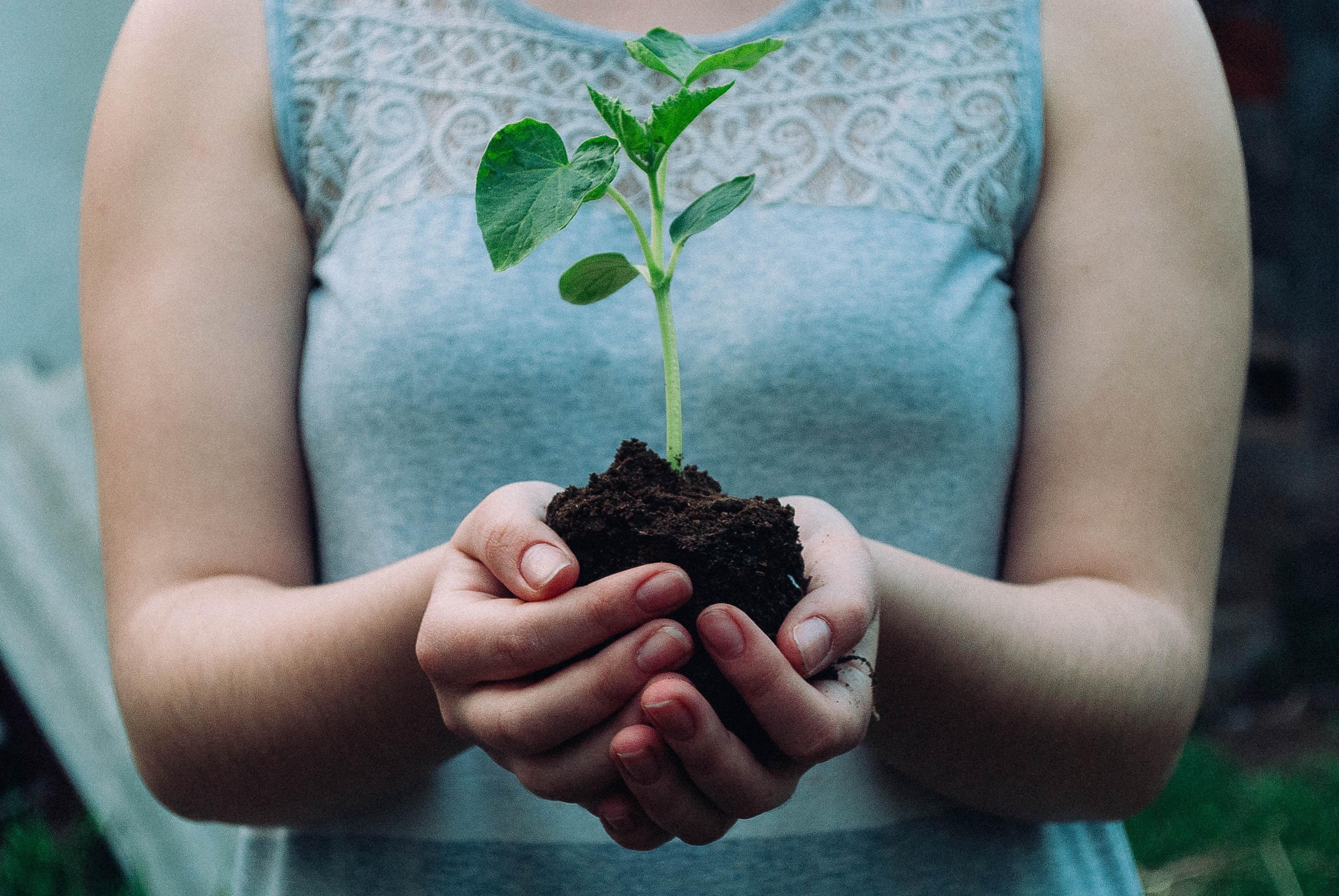 Frau hält eine Pflanze in ihren Händen