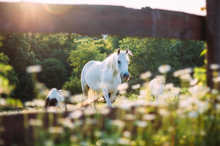 Weißes Pferd in der Natur