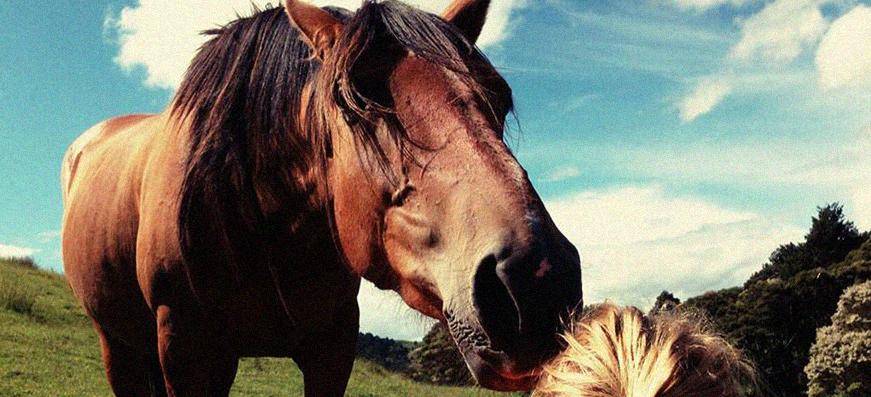 Farm oder Pferderancharbeit
