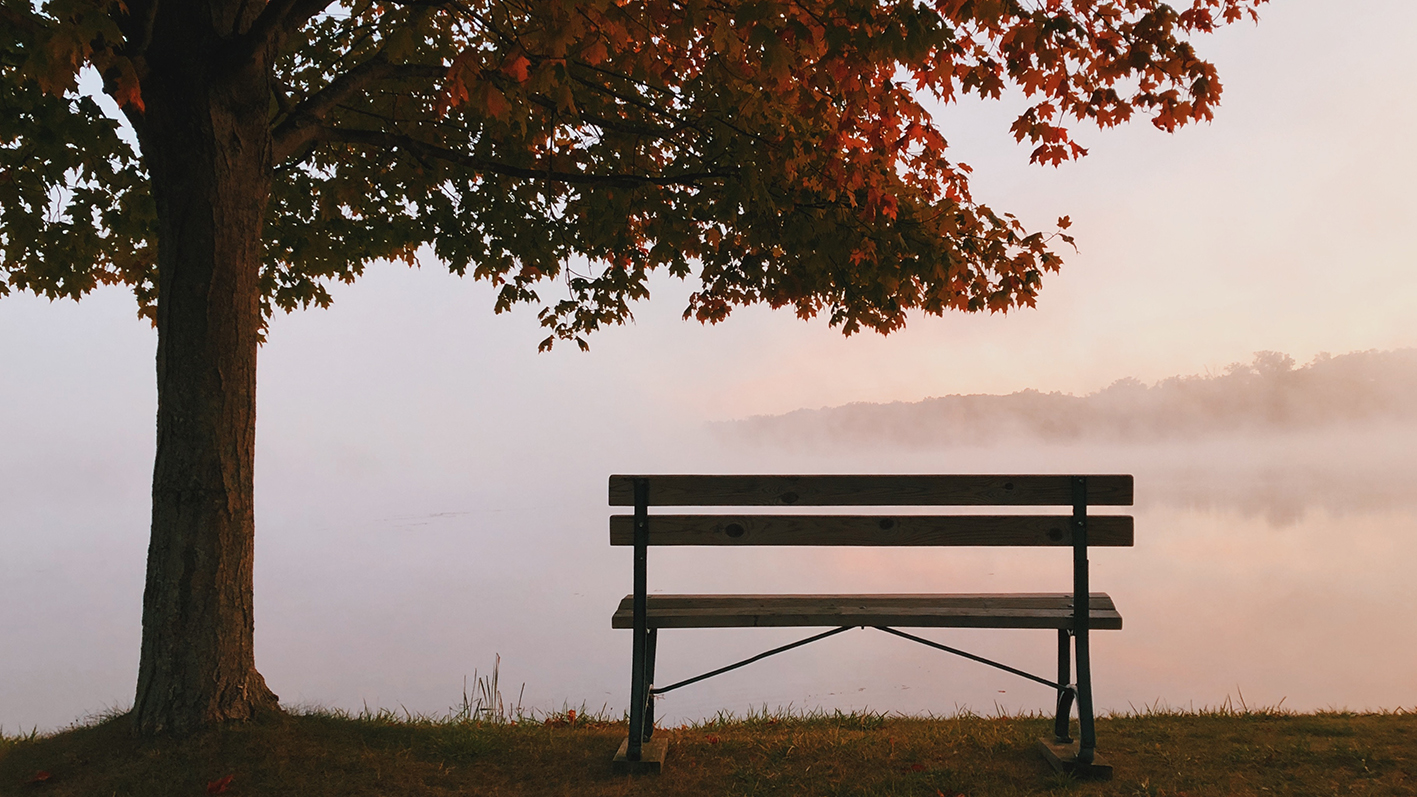 Autumn tree and empty bench in front of a lake